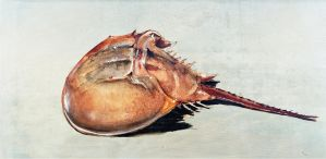 Horseshoe Crab by 5bodyblade