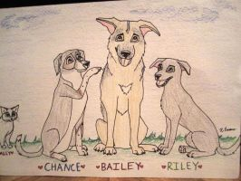 Three dogs and a cat by iheartart06