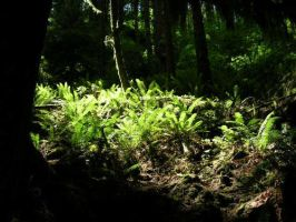 Fern Gully by restlesswillow