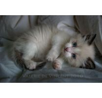 itty bitty kitty by zasu