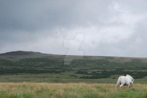 Life on the Moors by Katie-Cuddles