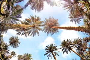 the palms by sadiqalkhater
