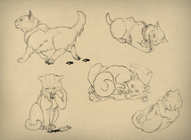 How to draw cats by LadyAway