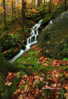 GSMNP Autumn 11 by TRBPhotographyLLC