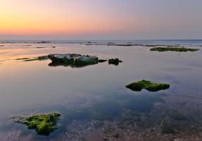 Palmachim Beach Moss by JBord