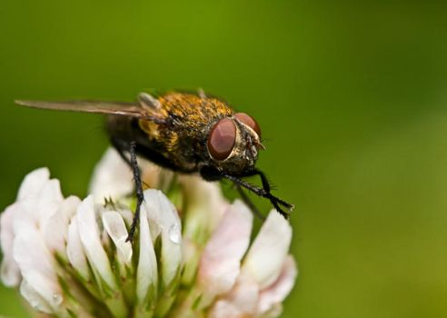 Just a Fly by artfoto