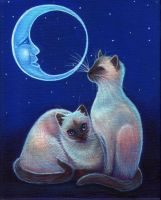 Moon lit Siamese by carefulwhatyawishfor