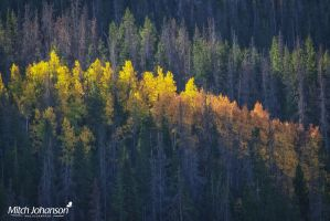 Line of Golden Colors by mjohanson