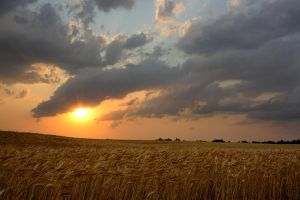 Sunset Over A Wheat Field by Merhlin