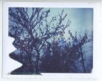 polaroid82 by firstkissfeelings