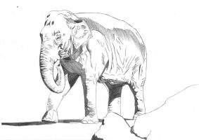 Elephant pencil study by 00hellhound00