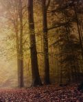 Premade Background 47 by maiarcita