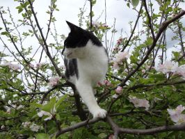 Cat up a tree stock 2 by GlitterKitten83