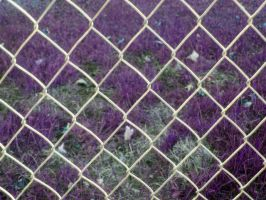 Chain Link Fence by SweetSoulSister