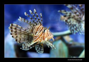 looking for nemo by naz1