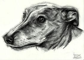 Vera the Greyhound by Pen-Sive