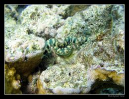 Clam in the coral 2 by Keith-Killer