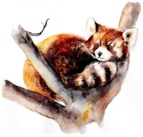 Red Panda by AnnaShell