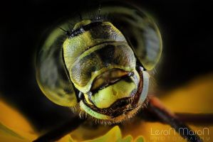 dragonfly_2 by LeronMasoN