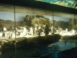 Penguins 1 by fullmetaladdict1101