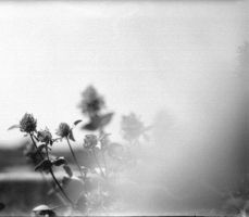 analogue blooming by Anaris88