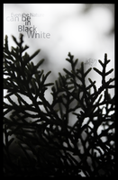 Nature, in Black and white. by Zd-designs
