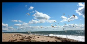 Seagulls by Tuftless