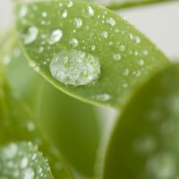 Droplet green by ziw-monster
