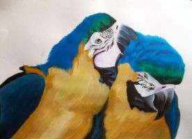 Parrots by HannahWhoDraws