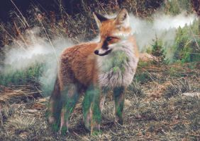 Forest Fox by DamionPoof