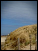 dunes at Noordwijk - Holland by simoner