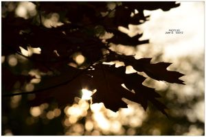 Autumn Rays by timelesscolors