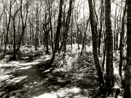 black and white forest by lonely-secrets