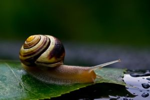 Snail by LAlight