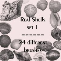 Real shells set 1 by rL-Brushes