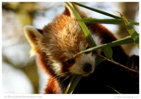 Tasty Bamboo Snack by In-the-picture