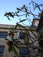 Peach Trees and Dorms by Liviania