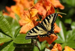 Yellow Butterfly by aurionPhoG