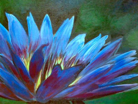 Water Lily by brandonvos