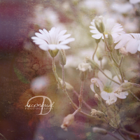 . Softly . by decembrial