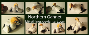 Northern Gannet - Gift by Bittythings
