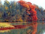 Shades of Autumn 8 by MadGardens