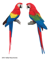 Macaws by RSNascimento