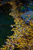 Floating Leaves by GlassHouse-1
