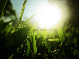 The Grass and the Sun 5 by Hvan