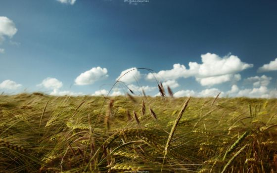 summer's breeze 2560x1600 by hermik