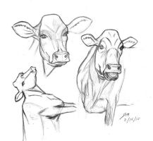 Cow Study 021515 by JRMurray76