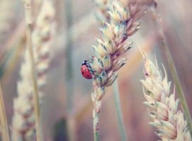 coccinelle by zoz1995