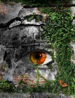 eye in the wall by Tom-in-Silence