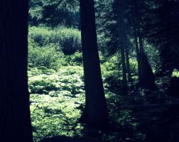the forest whispers by RiparianVeins